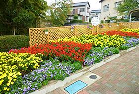 大島三栄会花クラブ花壇