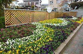 大島三栄会花クラブ