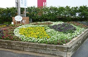 今寿会園芸部花壇