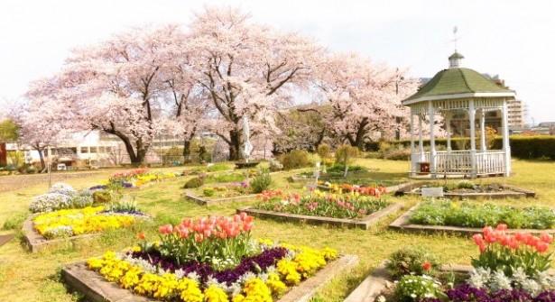 西山公園 市民花壇と桜(春)
