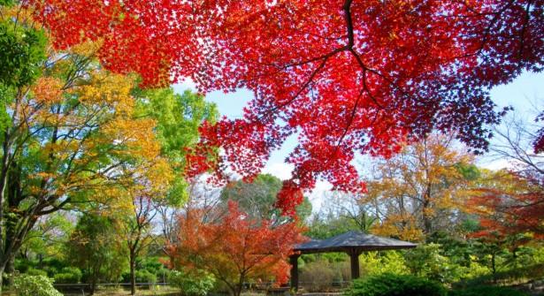 西山公園 紅葉(晩秋)