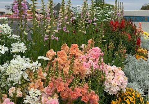 ボーダー花壇